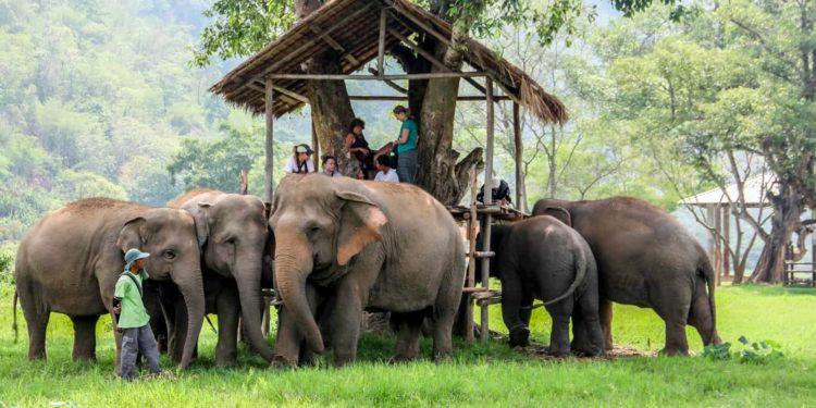 thai elephants in Phuket