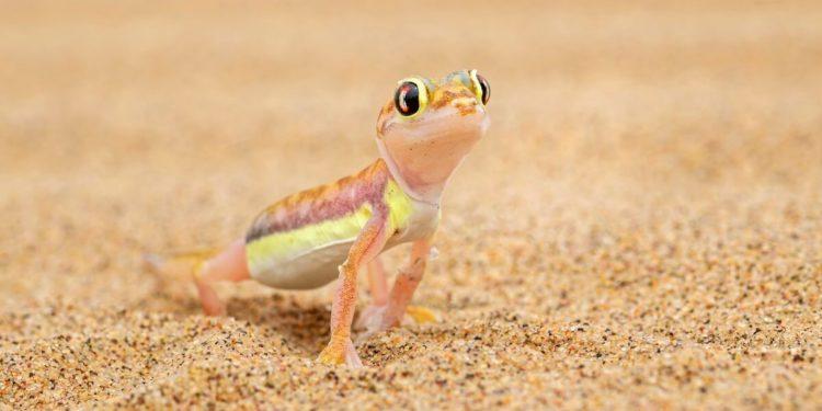 lizards in Phuket
