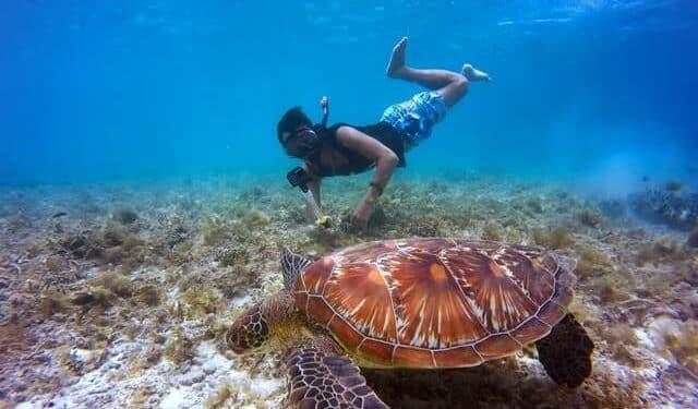 sea turtle in Zakynthos